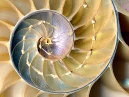 s-spiral-5